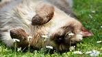 Обичате котките? Тогава посетете тези 5 места!