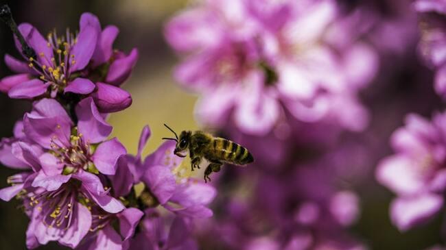 Какво е пчелен туризъм и къде да го практикуваме?