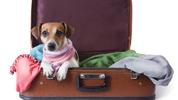 Домашен любимец в самолета: Какво трябва да знаем?