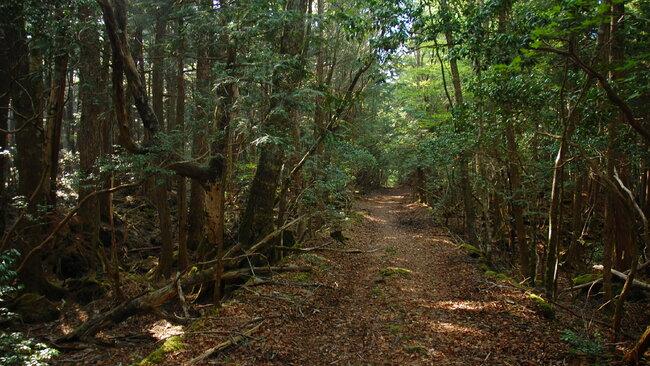 Мистериозната гора на самоубийците в Япония