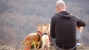 Вижте новите правила на ЕС за пътуване с животни
