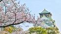 Аномалия - вишневите дръвчета в Япония цъфнаха!