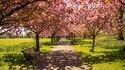 Хайд парк – из красотите на най-големия лондонски парк