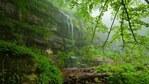 Копренска екопътека - разходка по дървени мостчета сред дивата природа