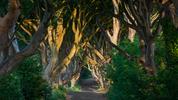 Един вълшебен път в Ирландия