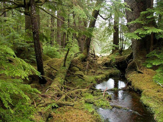Разходка в гората: 7-те най-невероятни гори в света